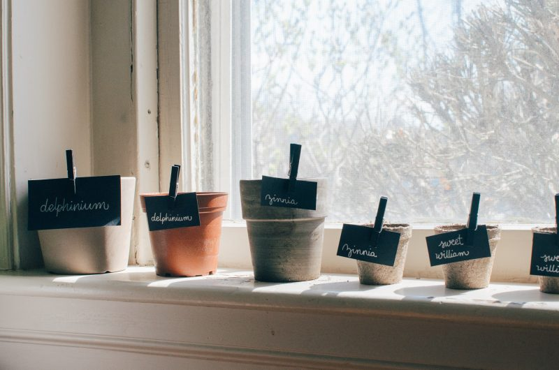 Water Seeds of Joy - plants by window growing in pots